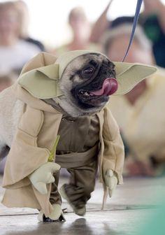 yoda - Pugs Halloween Costumes