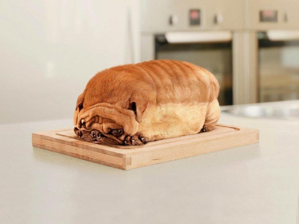 bread-pug.jpg