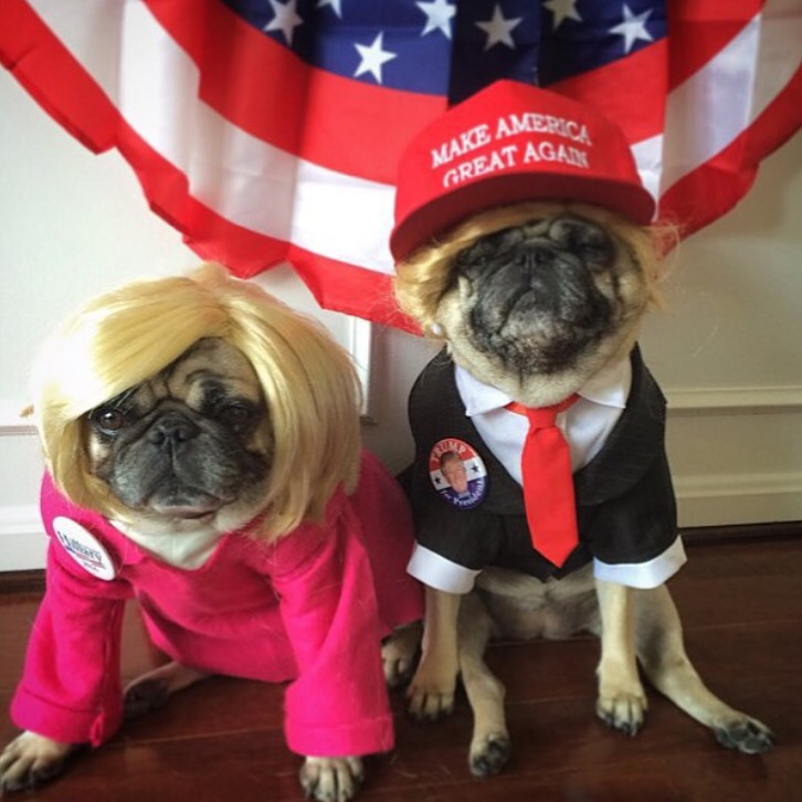 Trump and Hillary Political Pugs : Photo Credit @zoereagan