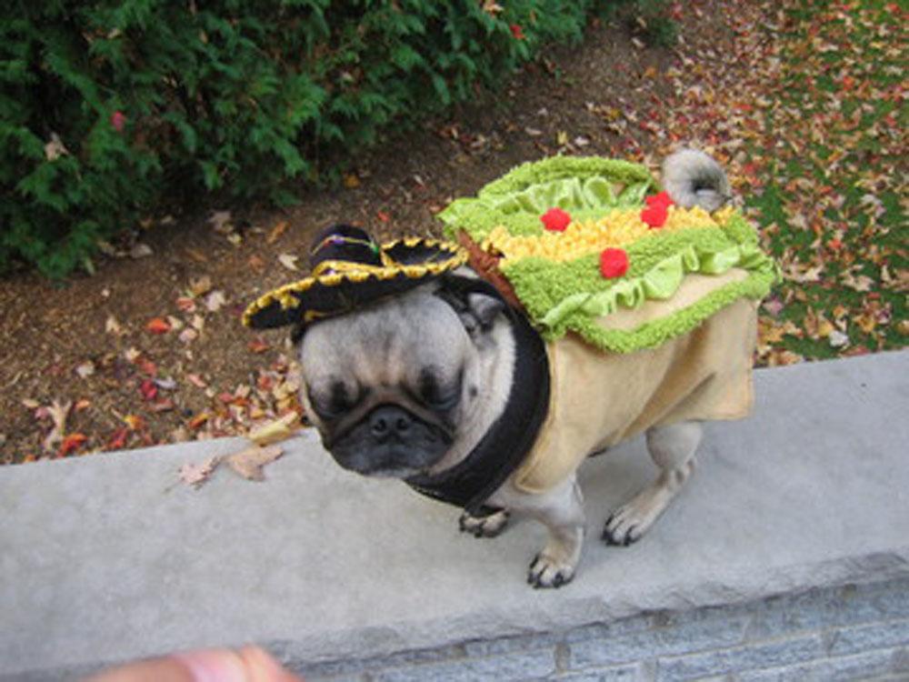 Pug Taco Costume
