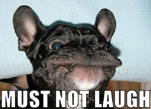 french-bulldog-face-meme.jpg