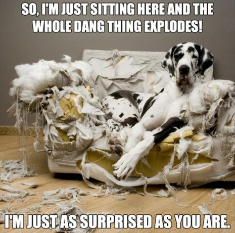 funny-dogs-chewed-up-couch-465x461.jpg