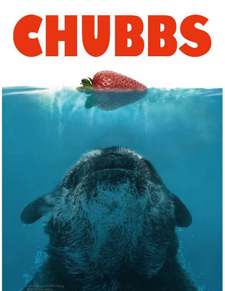 chubbs_strawberry