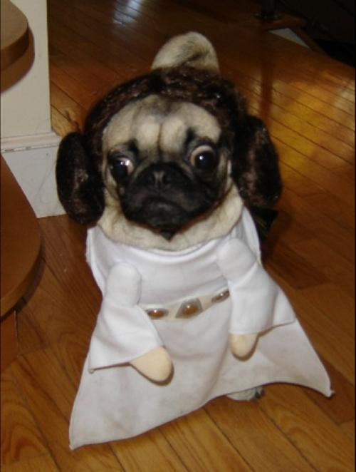 cute-animals-pug-dog-star-wars-costume-princess-leia-pics.png