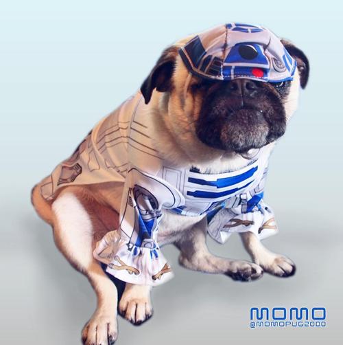 pug star wars r2d2 costume