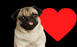 new-header-pug2-copy.png