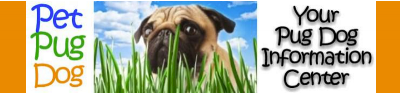 pet pug dog website