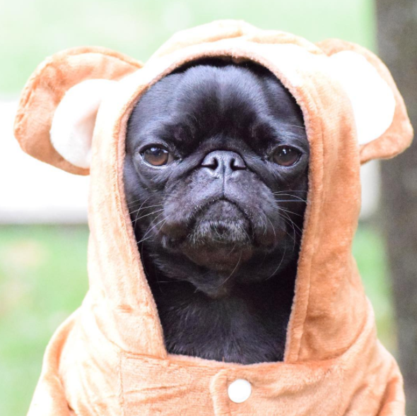pug teddy bear