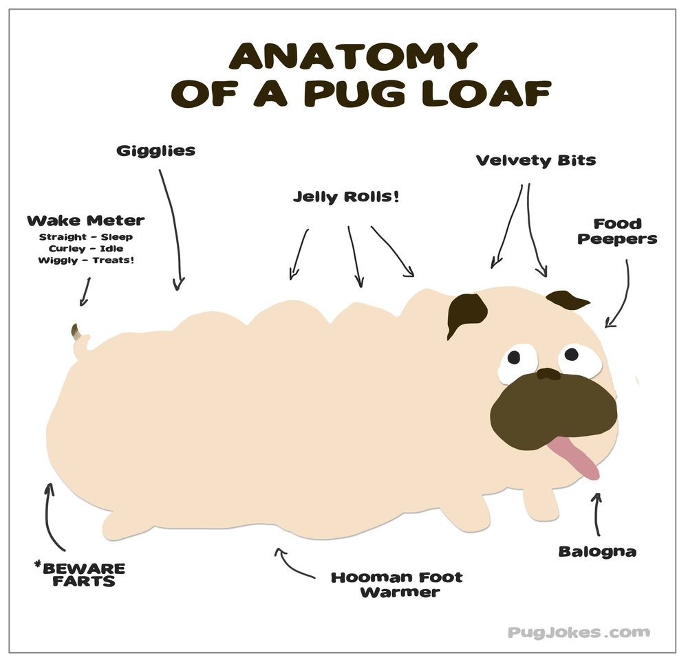 Anatomy of a Pug Cartoon