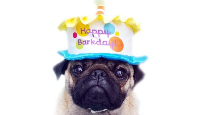 Cutest Happy Birthday Pug Meme