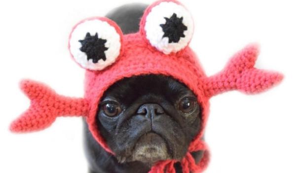 Gwen The Black Pug Lobster
