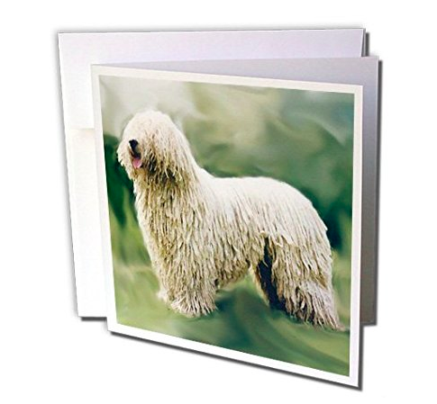 komondor mop dog greeting card