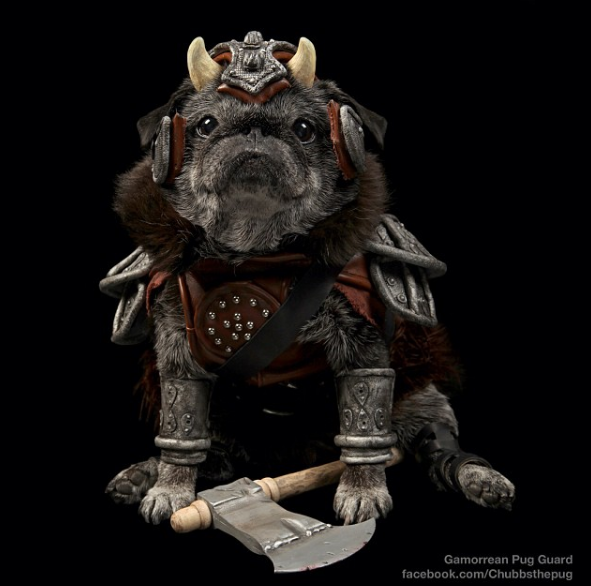 pug costume mega list