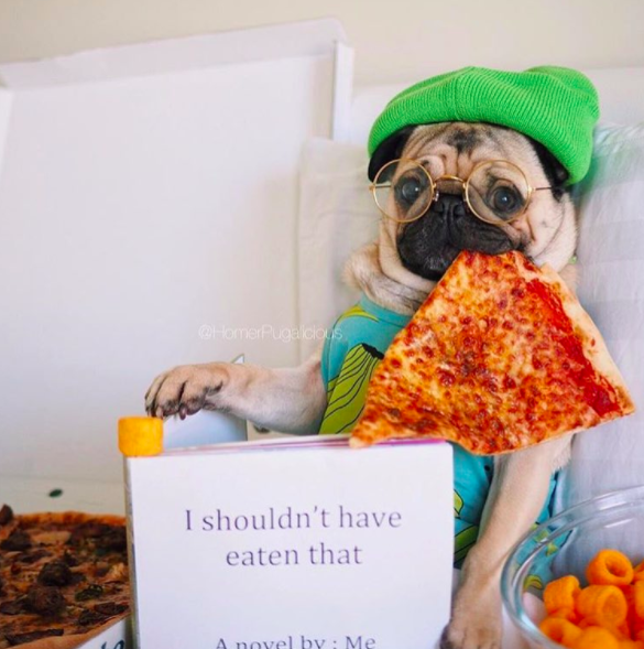 pizza dog costumes