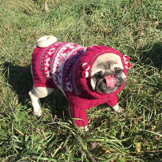 Sweater for pugs