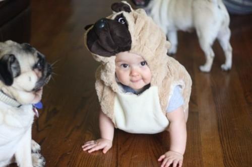 Pug Stuffed Animal Transformed
