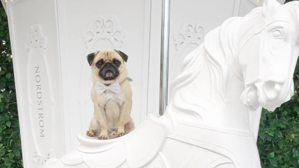 nordstrom pug marrie go round
