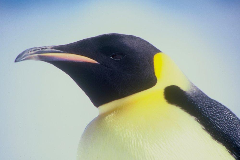 Antarctic research buddy