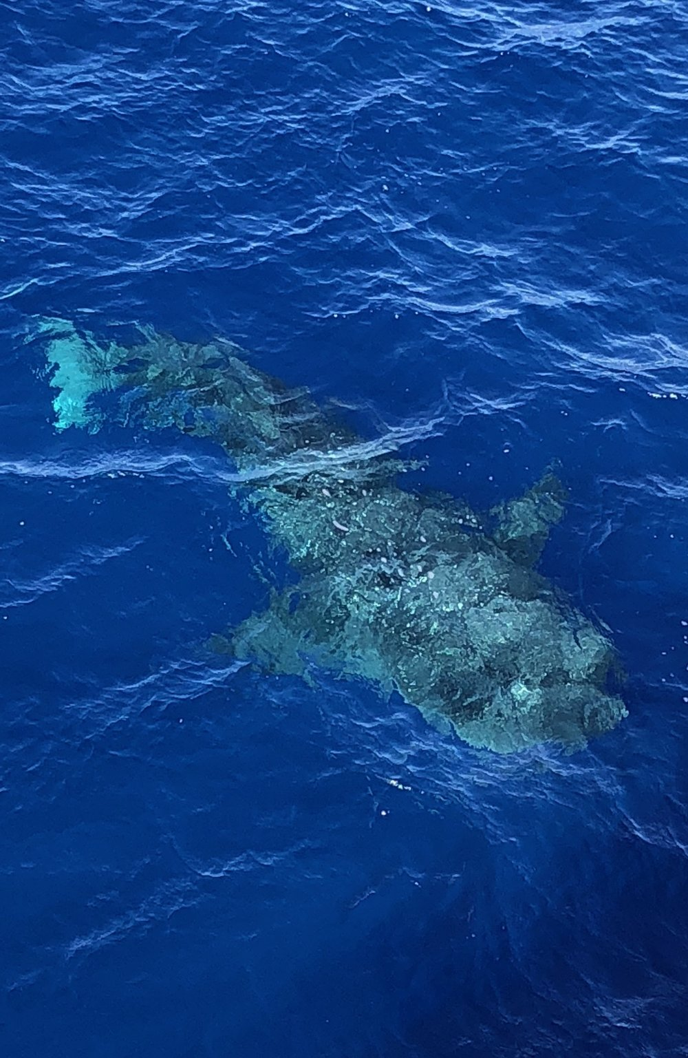Out in the blue, blue Pacific, this is who comes around to visit
