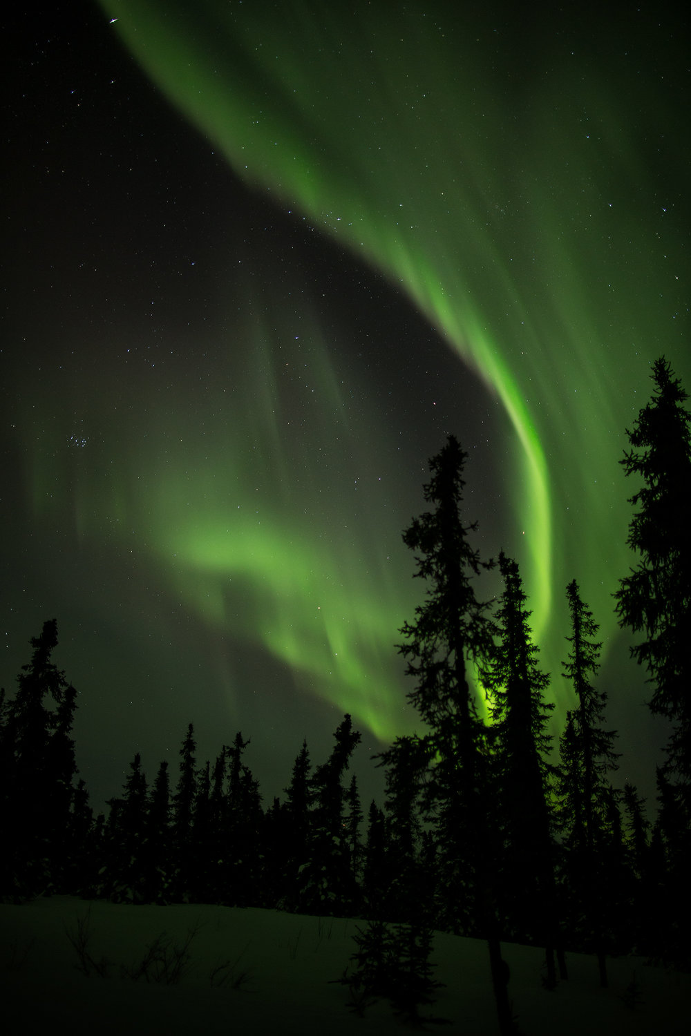Clear skies allow for unobstructed view of the heavens as the aurora dances above a stand of White Spruce near Cleary Summit. Click to view full image.