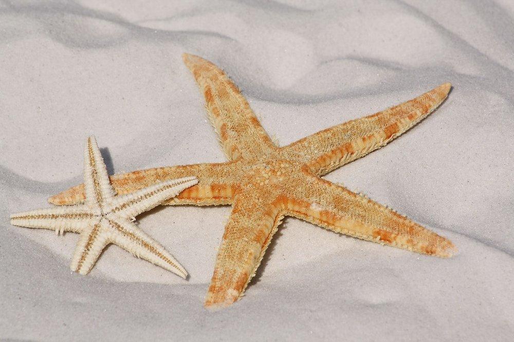 starfish-sand-beach-sea-56610.jpg