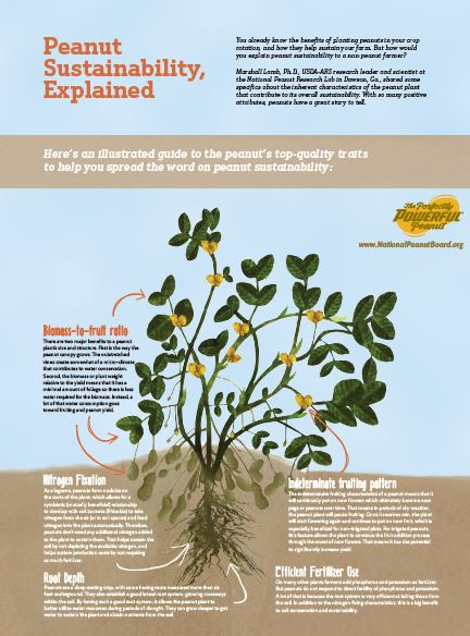 Peanut Sustainability Explained -Plant Poster