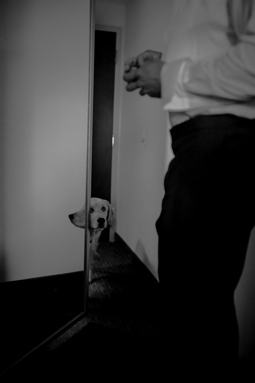 Alternative wedding, boho wedding, backyard wedding, Charleston West Virginia Wedding Photographer, Shenandoah Valley Wedding Photographer, Virginia Wedding Photographer, Intimate wedding, bold, vibrant, artistic wedding photography, fine art wedding photography, adventure wedding photography, West Virginia, Virginia, best wedding photography, moody wedding photography, dogs at weddings, groom