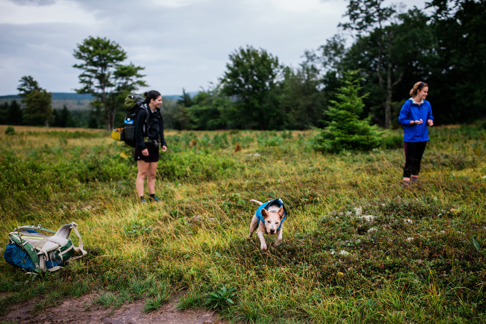 Dogs on hikes, Dolly Sods, West Virginia adventure photographer
