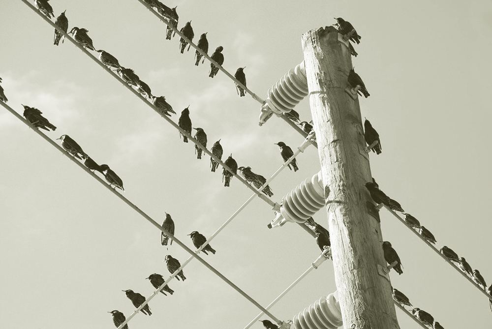"- Bird On a WireIs the name of a song, a film, a computer game and an animated short. Birds rest on electrical lines in the absence of trees, sometimes finding an untimely ending. The phrase ""bird on a wire"" symbolizes our tenuous relationship with freedom."