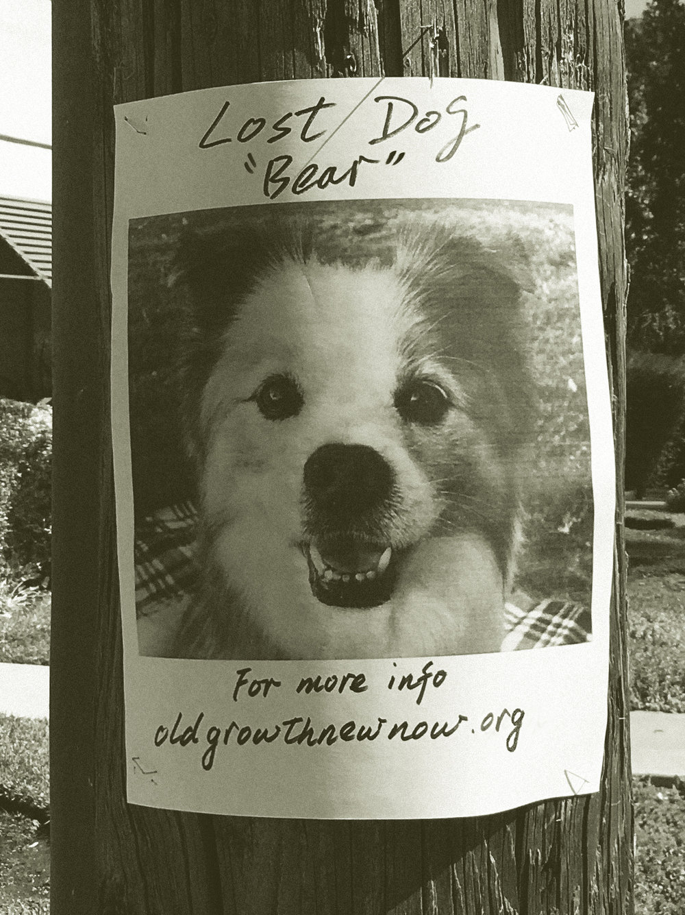 - Lost Dog Flyers turn utility poles into community message boards.