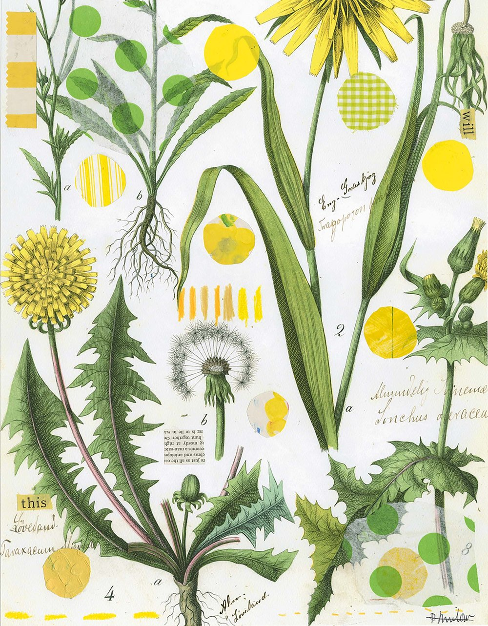 Botanical Series: Yellow Dandelion