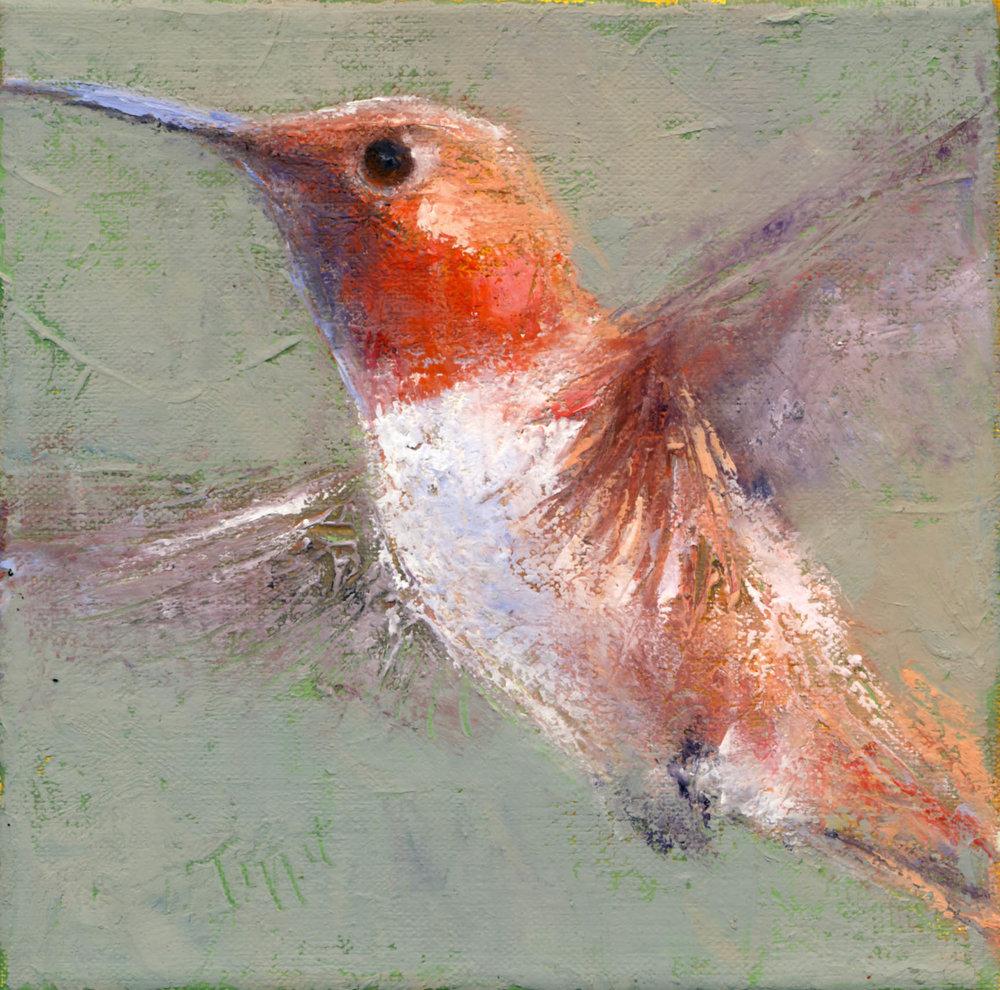 """Hummingbird, Oil/cold wax original, 6 x 6"""""""