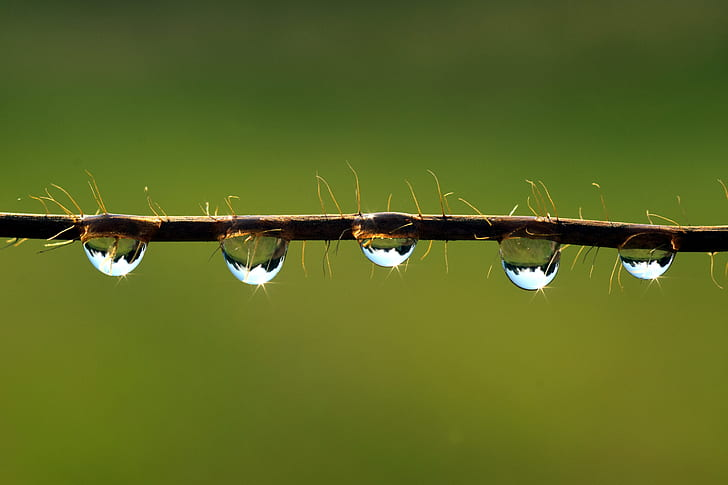 drip-mirroring-water-drop-of-water-preview.jpg