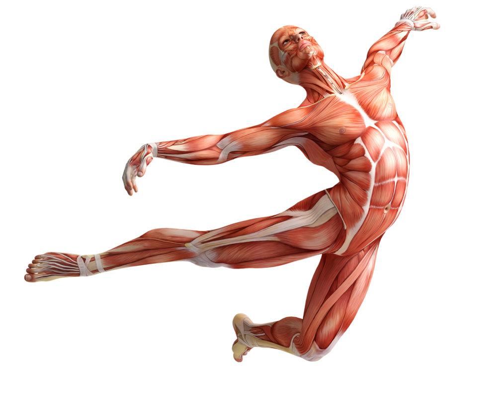 flying-muscle-man.jpg