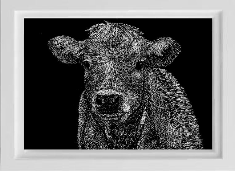 unsketch scratchboard cow pet portrait