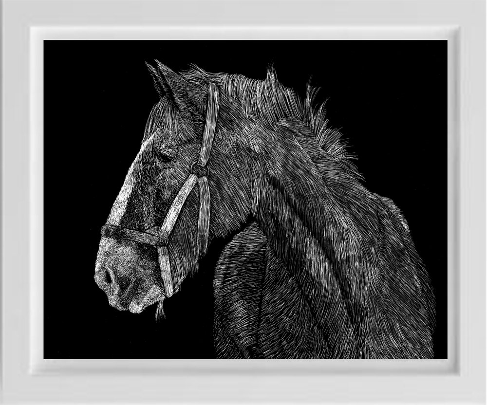scratchboard draft horse by unsketch