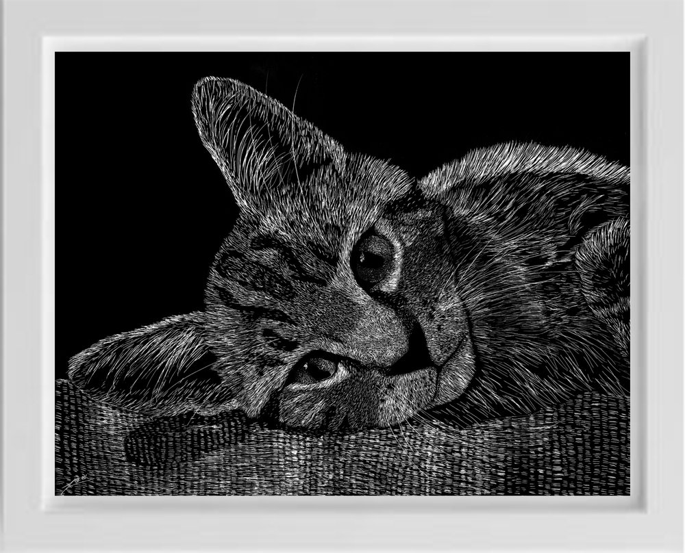 scratchboard tabby cat kitten by unsketch