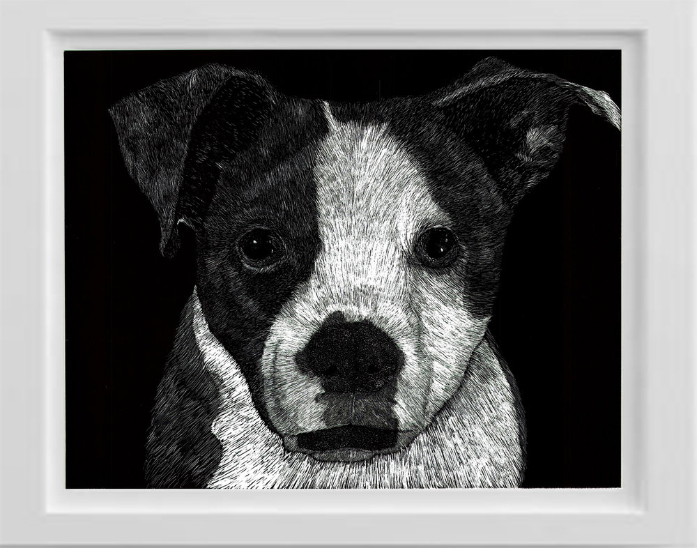 Scratchboard dog pet portrait