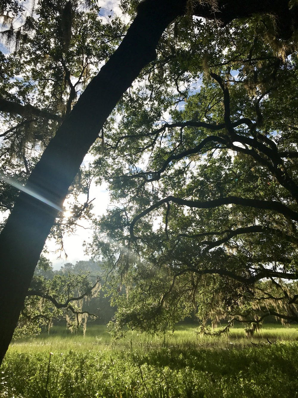 THE CHARLESTON TREEHOUSE