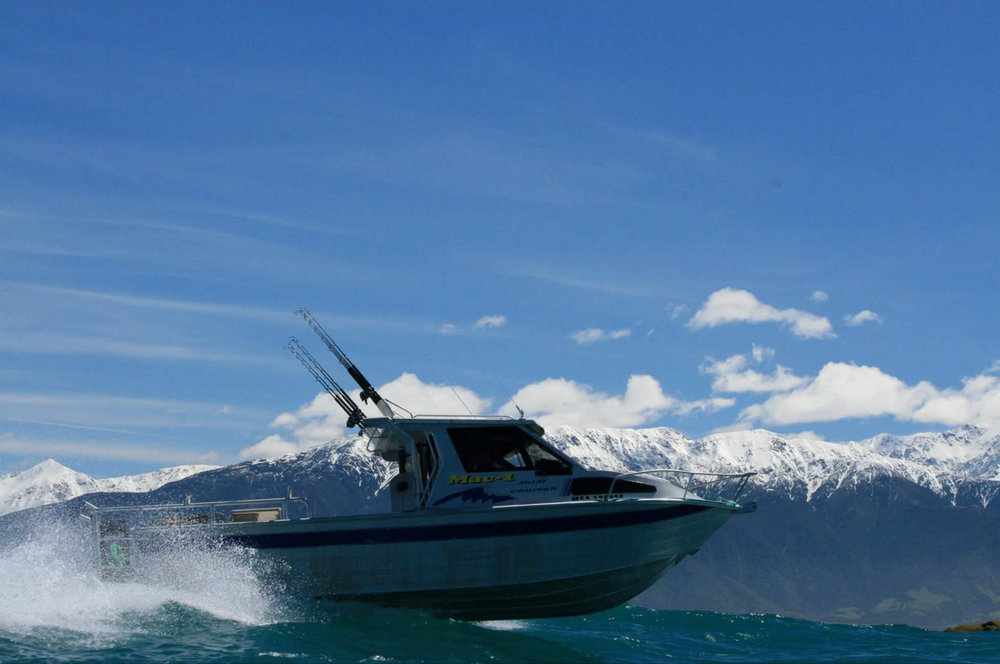5  . Head out of town for fun filled day of fishing with Kaikoura Fishing Tours