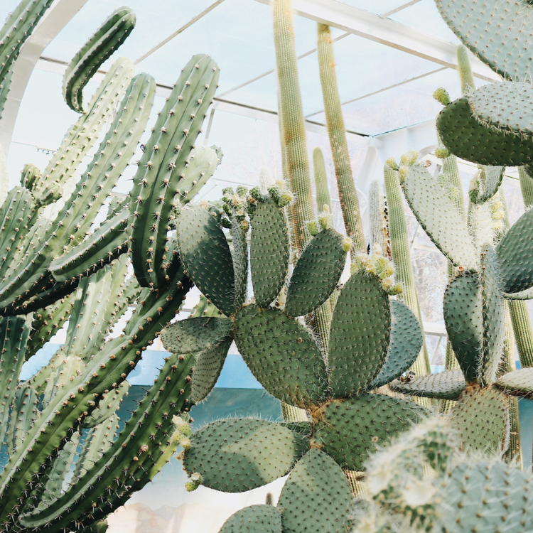 3. Wander the CACTUS GARDENS AT THE BOTANIC GARDENS - Wander into the gardens from the carpark or from the Boatsheds towards Ilex cafe. Opposite Ilex you will find Christchurch's very own cactus gardens in the glass dome. Explore everything from florals to cactuses again a beautiful spot to teach, photograph or just relax.Uploaded by Mariet Torr
