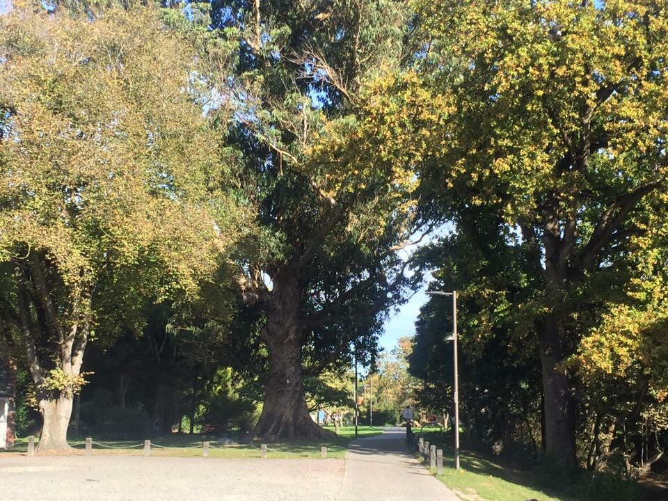 2. WALK RICCARTON BUSH - Riccarton bush is nature close to home, with a beautiful walk that is suitable for any age, prams and wheel chairs. If you are clever you might find a kiwi guardian sign post.#Free #Walk #Healthy #MHAW📷 Uploaded by rachaelmclellan