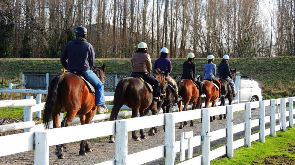 2. Take a 1 hour horse trek - If land based adventures are more your thing, give a horse trek a go this summer. Ideal for beginners to experience riders. Views of the Waimakariri River and dubbed the fantail river ride as these native birds often swoop around the horses.