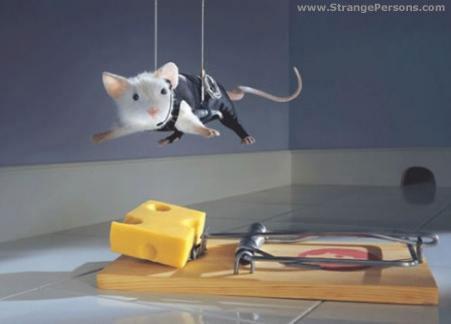 Udskift osten med en rosin, og så er jeg overbevist om, at det ser sådan ud, når musene er på spil.