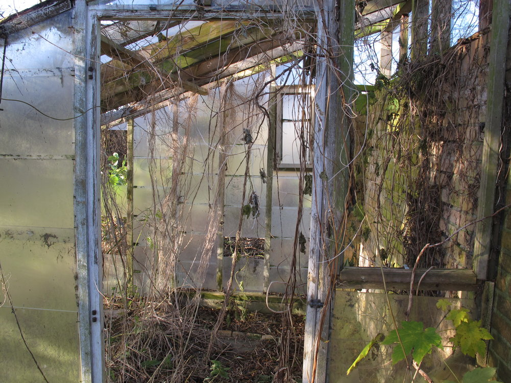 Ved den lille, vandfattige sø står et lille, faldefærdigt drivhus.