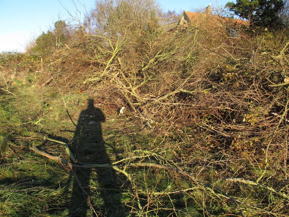 Jeg har akkumuleret en del bunker af kvas og grene i forbindelse med rydningen af grunden. Det her er den store af dem på cirka 15 x 5 x 2 meter.