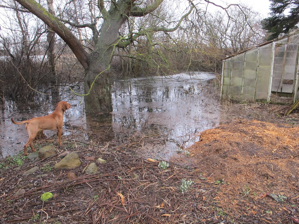 Den lille vandfattige sø lever for tiden ikke rigtig op til sit navn, og er gået så meget over sine bredder at det faldefærdige drivhus står under fem centimeter vand.