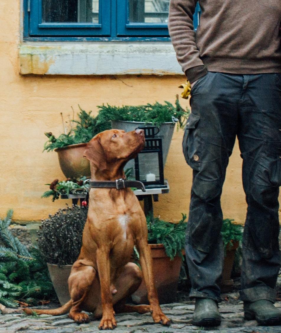 Haddock er en dejlig hund,men han har nogle virkeligt ulækre vaner. Foto: maivanilli.dk