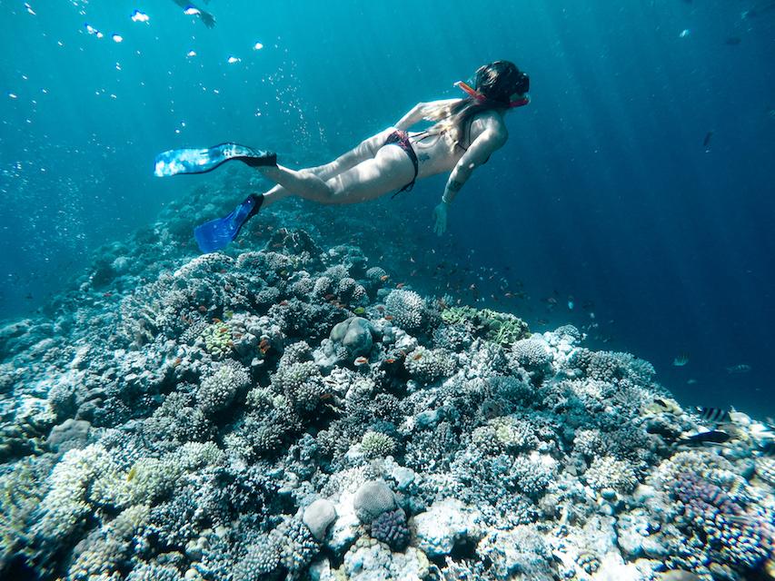 O mar vermelho é um dos melhores do mundo para mergulho