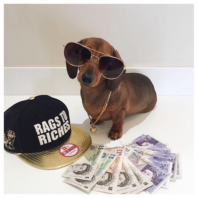 Instagram/noodlethedaschund Nothing makes Noodle happy like money and a snapback.
